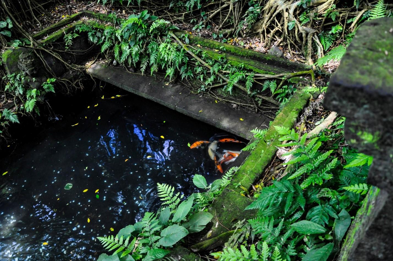 Пруд. Лес обезьян, Убуд, Бали