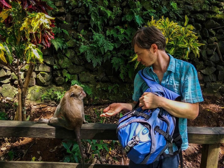 Travel Bug Club и обезьяна в Лесу обезьян, Убуд, Бали