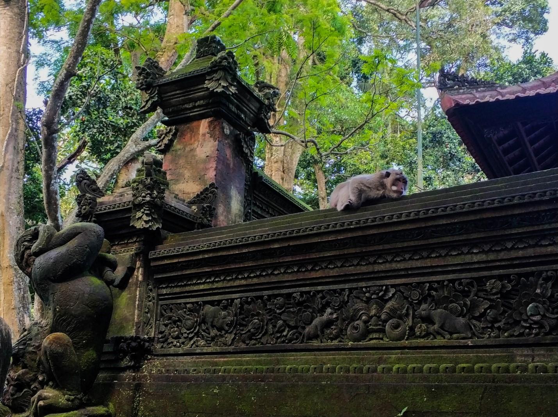 Задумчивая обезьяна в Храме обезьян в Лесу обезьян, Бали