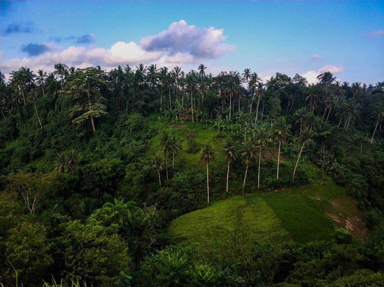Лес на острове Бали