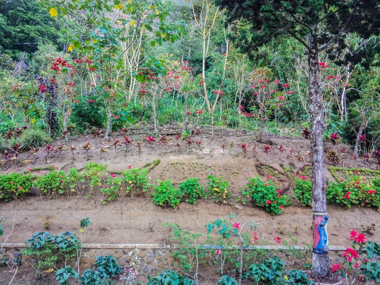 Огород на острове Ява
