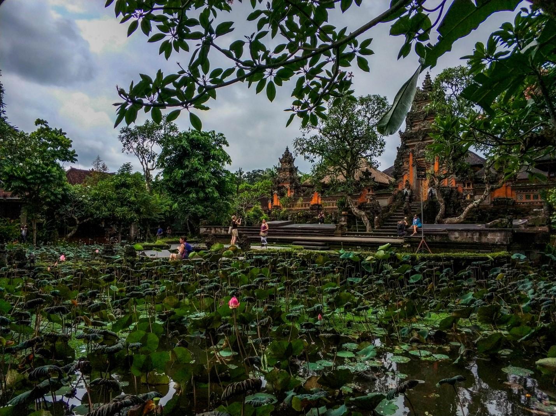 Лотосы в Водном дворце на Бали