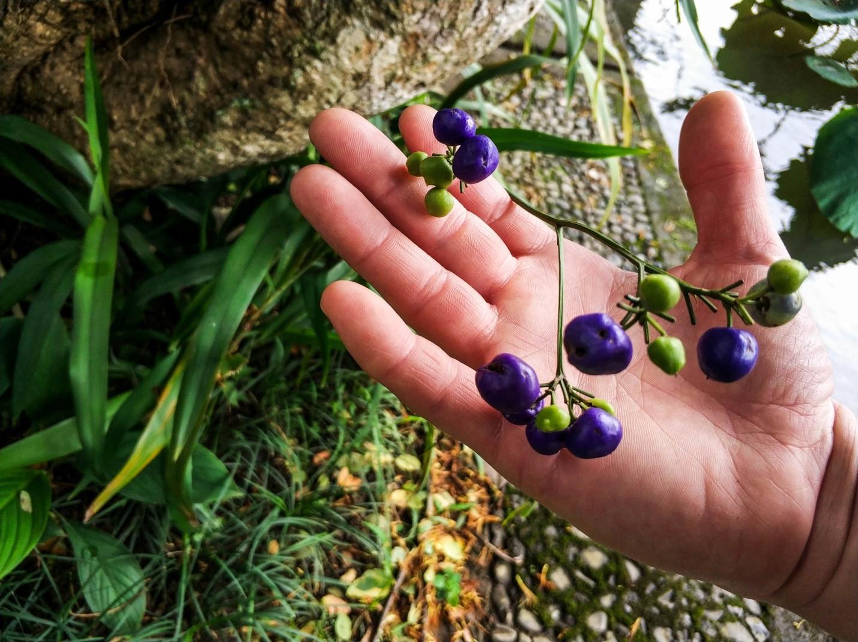 Необычные ягоды на Бали