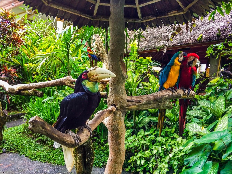 Тукан и попугаи на Бали
