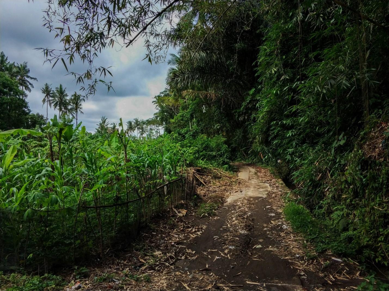 Природа Бали