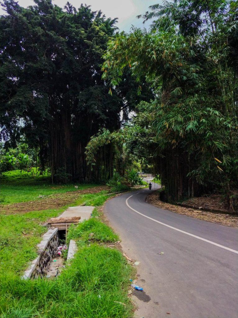 Дорога и природа острова Бали