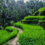 Знакомство с жизнью простых балийцев