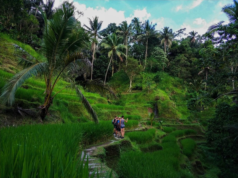 Рисовые террасы на острове Бали