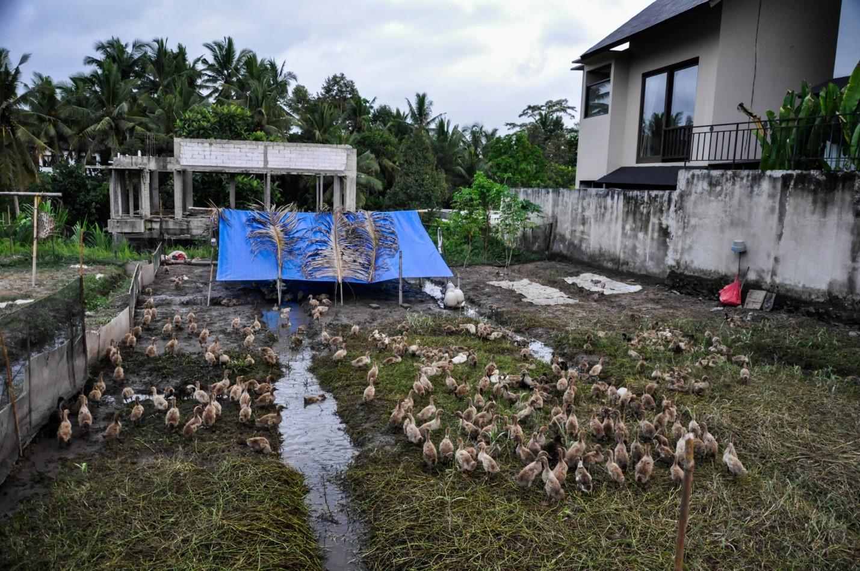 Домашнее хозяйство на острове Бали