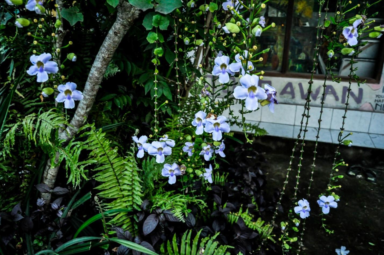 Уличные цветы на острове Бали