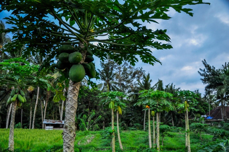 Пальмы на острове Бали