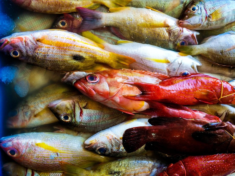 Свежая рыба на рынке Бали