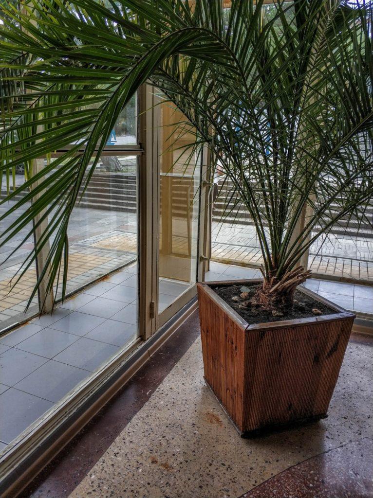 Советские деревянные кадки с пальмой