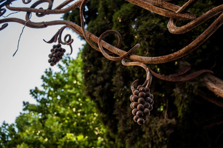 Железные виноградные лозы