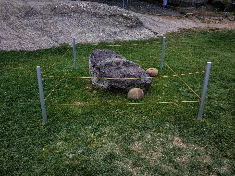Памятник ящерице, обитающая в Грузии
