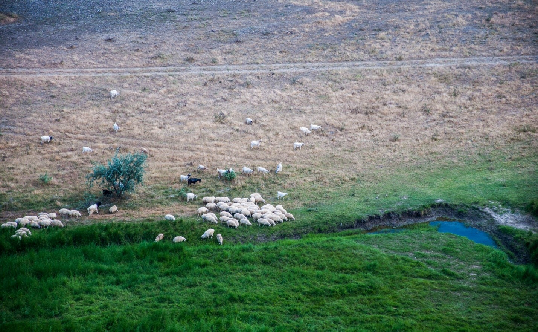 Природа, овцы в Грузии