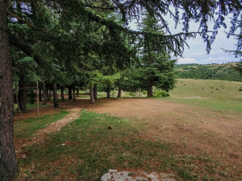 Хвойная роща и место для туристов в Кахетии, Грузия