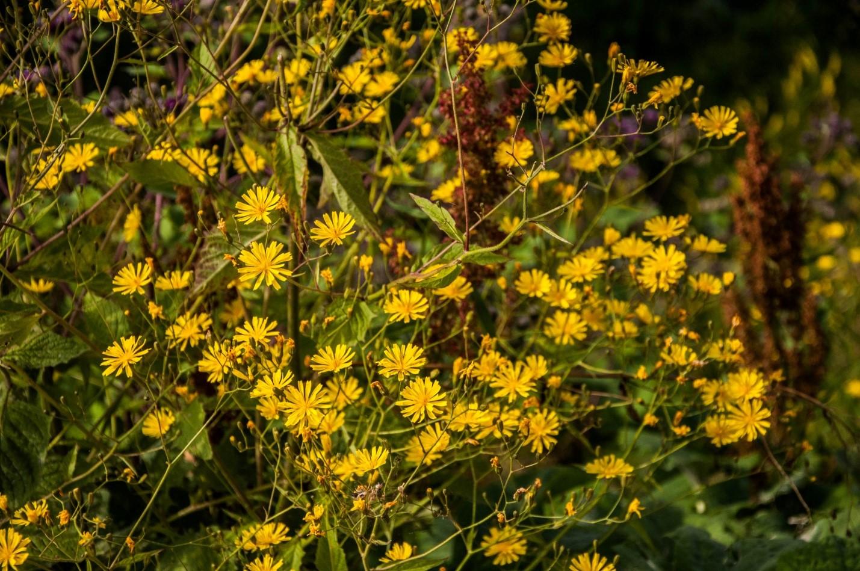 Желтые горные цветы