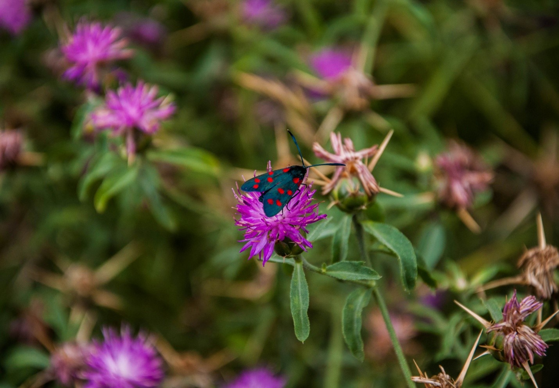 Красивая необычная бабочка